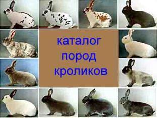 в каком возрасте можно спаривать кроликов калифорнийской породы